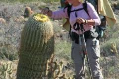pretty_big_cactus
