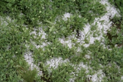 field_of_hail