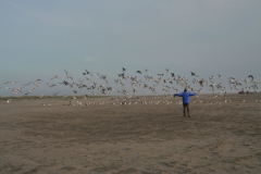 carsten_and_the_seagulls_on_a_beach_
