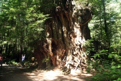 huge_tree