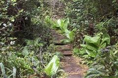 logwalk